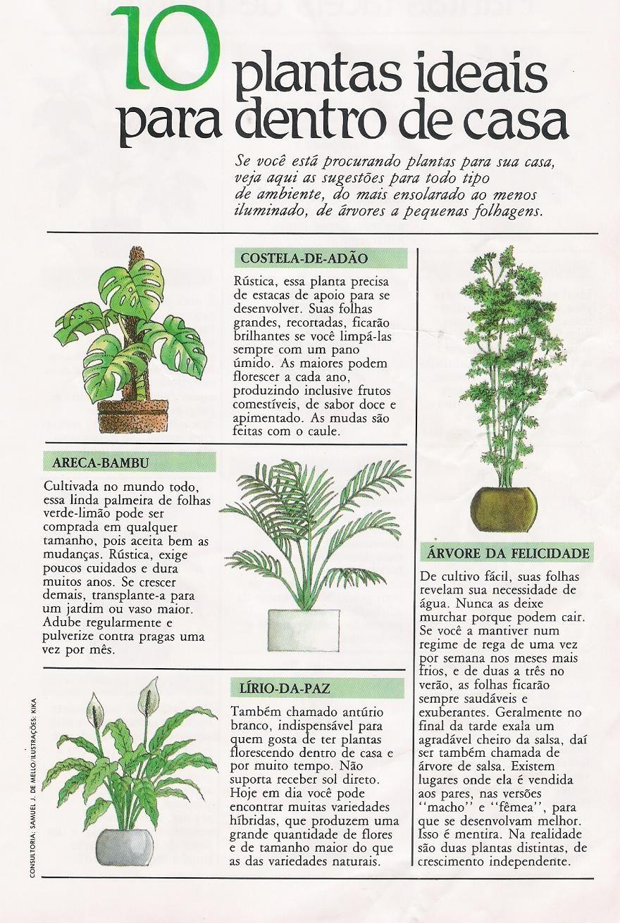 Plantas Para Interior Plantasdeinterior Em 2020 Ideias De