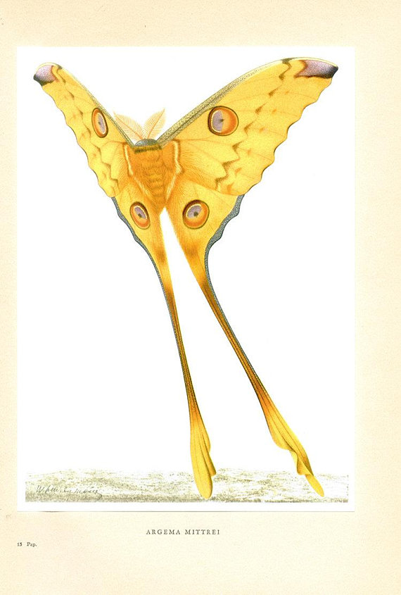 Old butterfly print yellow- 1950 Vintage yellow butterfly art ...