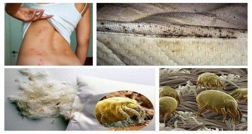 Acarieni In Pat E1448218503928 Healthy Organic Cholesterol