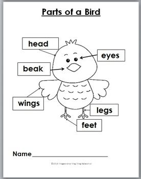 Bird Science with Movement Activities and Literacy - Bird Unit ...