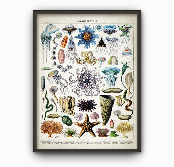 Oceanography Print Bathroom Poster Vintage By QuantumPrints