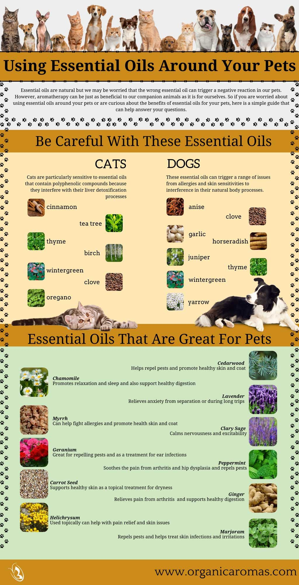Using Essential Oils Around Your Pets - #OrganicAromas #EssentialOils #Pets
