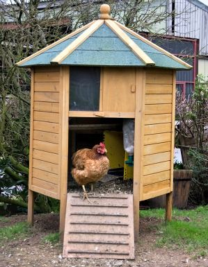 i love the unusual chicken coops chickens
