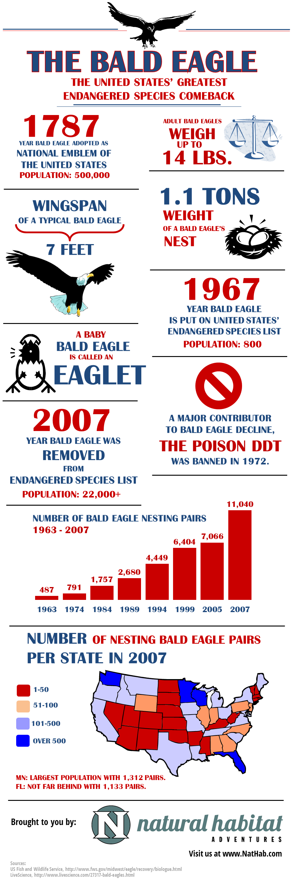 Fun Bald Eagle Facts for the 4th of July [Infographic]