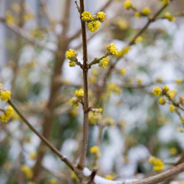 Small Trees For Borders: Plants For An East-facing Border