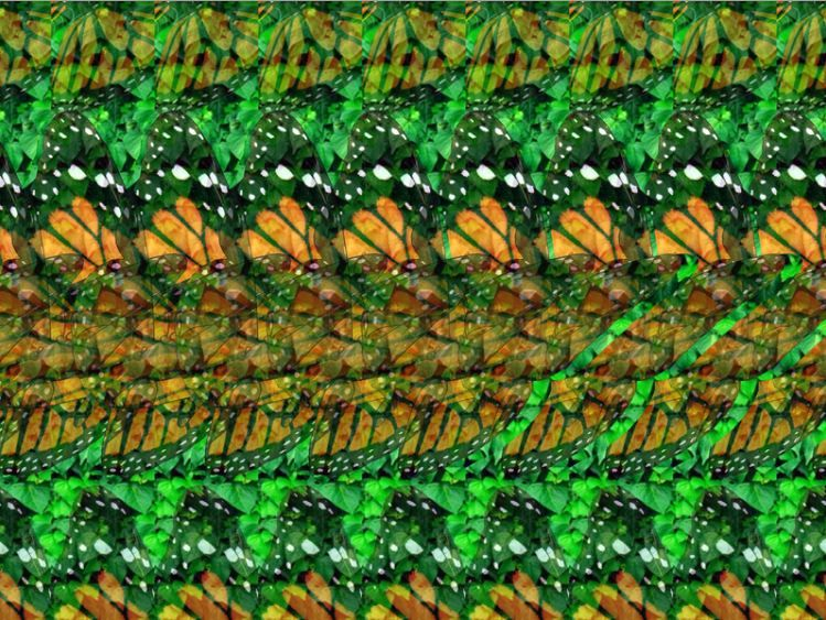3d Stereograms Gallery In 2020 Magic Eye Pictures Cool Optical Illusions Illusion Pictures