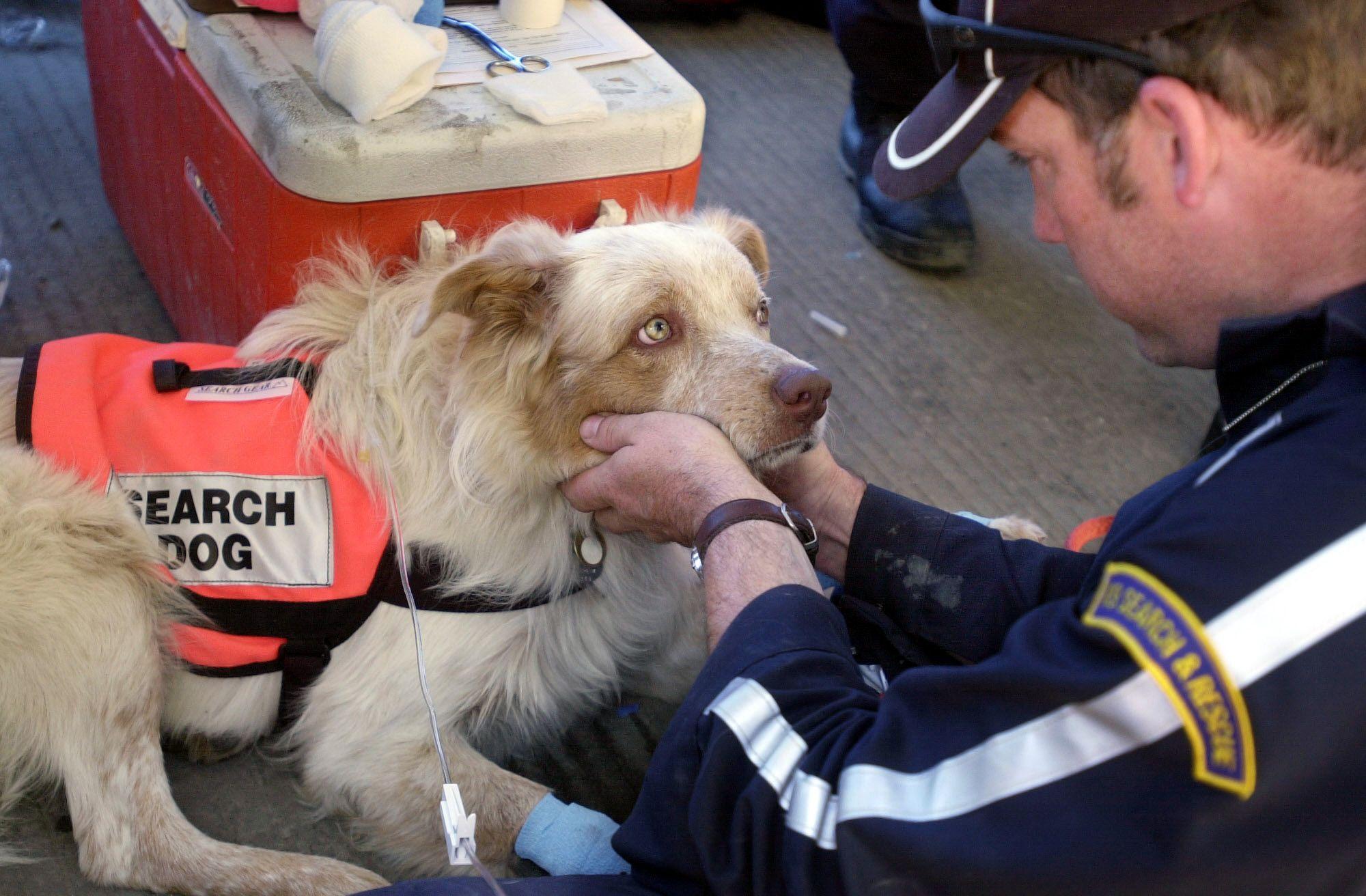 9 11 Rescue Dogs Dog Hero Dog 911