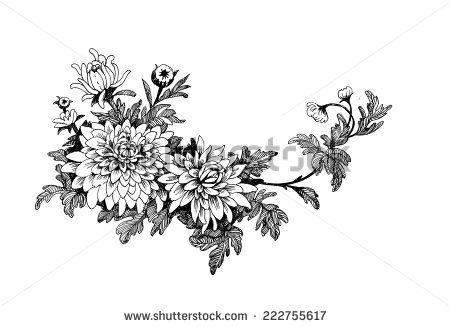 Hand Drawing Chrysanthemum Flower Vector Illustration Stock Vector Chrysanthemum Flower Tattoo Chrysanthemum Tattoo How To Draw Hands