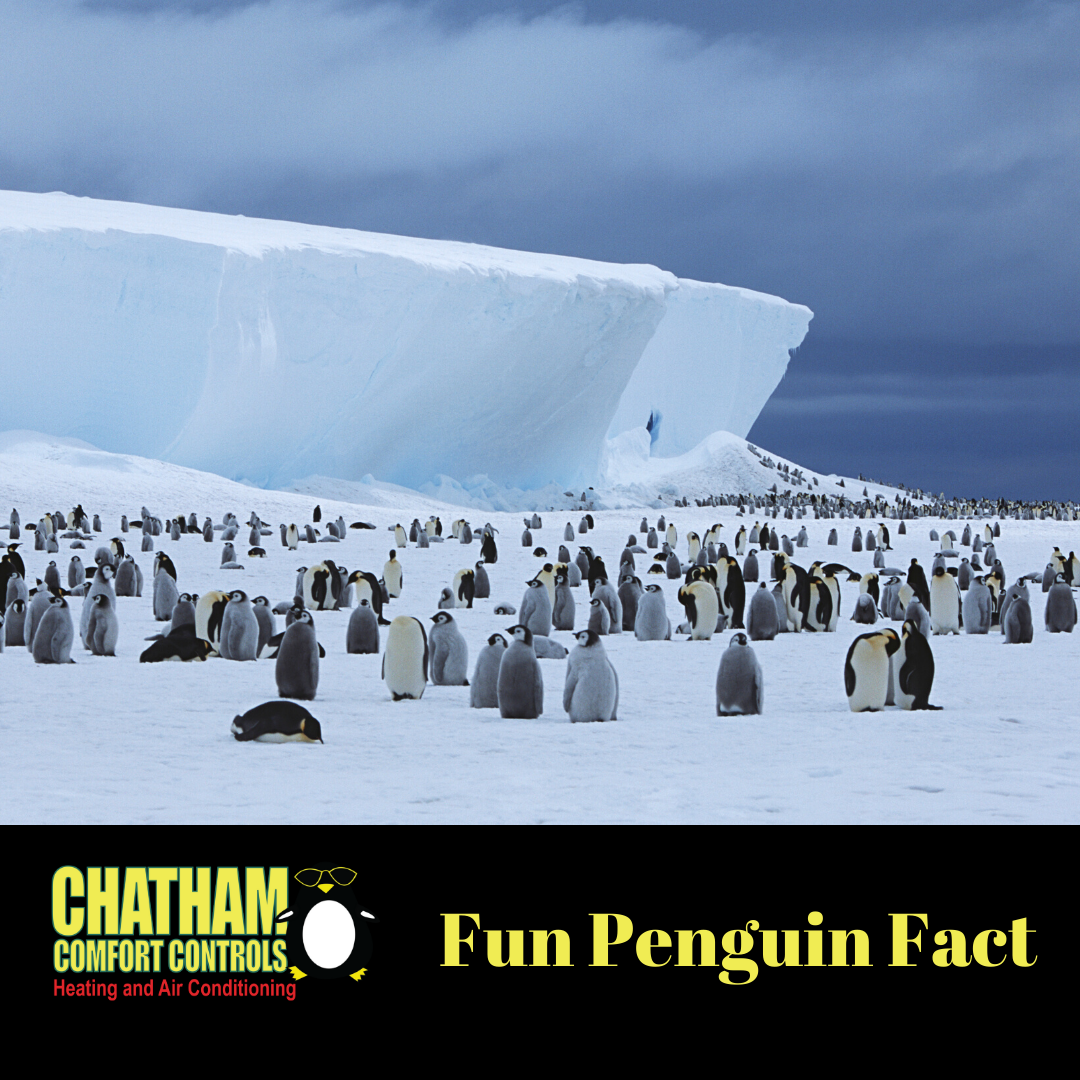 Did You Know That There Are 17 Species Of Penguins In The World And All Of Them Are Found Exclusively In The Souther Heat Installation Hvac Services Ac Heating