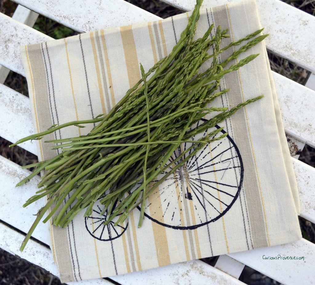 Asperge sauvage asparagus foraging food inspiration