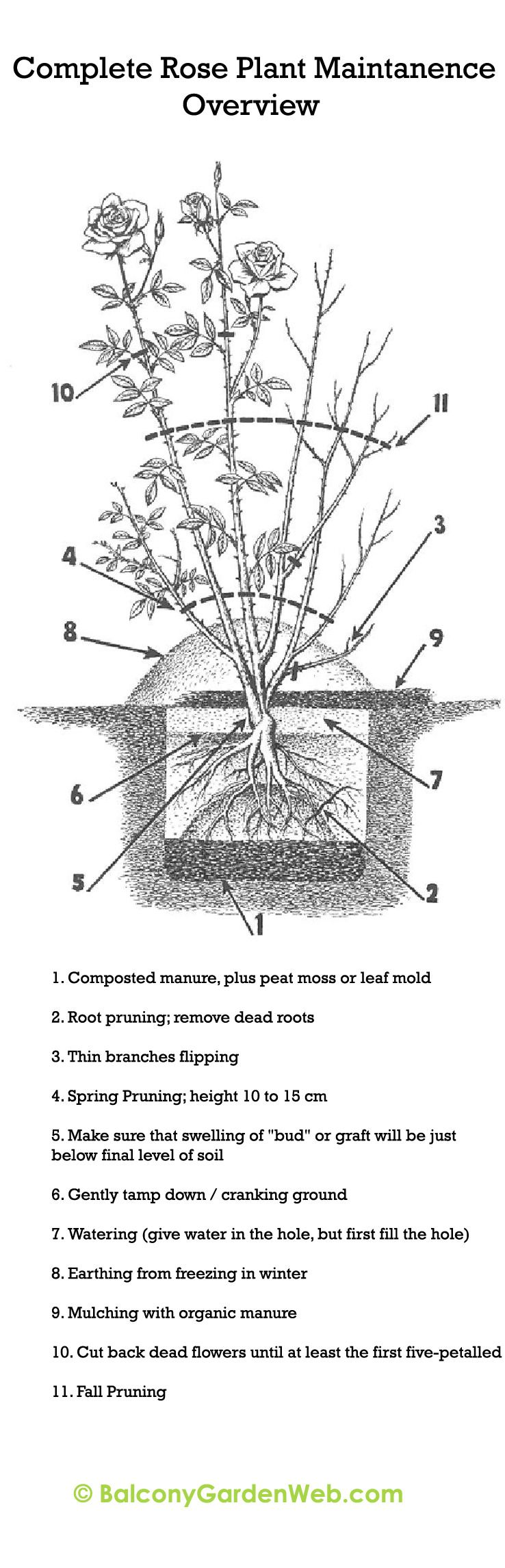 small resolution of diagram of a bush wiring diagram meta diagram of a rose bush diagram of a bush
