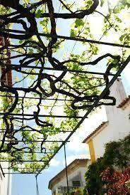 Image result for decorative metal roof trellis for grape vines