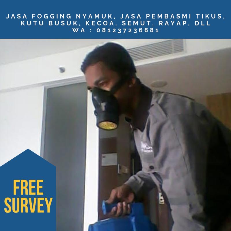 WA   081237236881 Pest Control di Jakarta Kami juga menyediakan  jasa  pembasmi kutu busuk atau bed bug ff887651f8