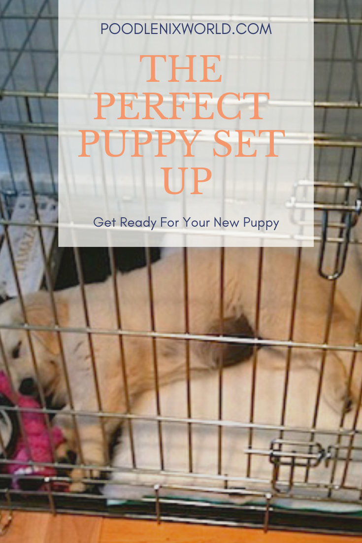 What Is The Perfect Puppy Set Up So You Can Manage Your New Dog In Their Early Months Puppy Crate Puppies Crate Training Puppy