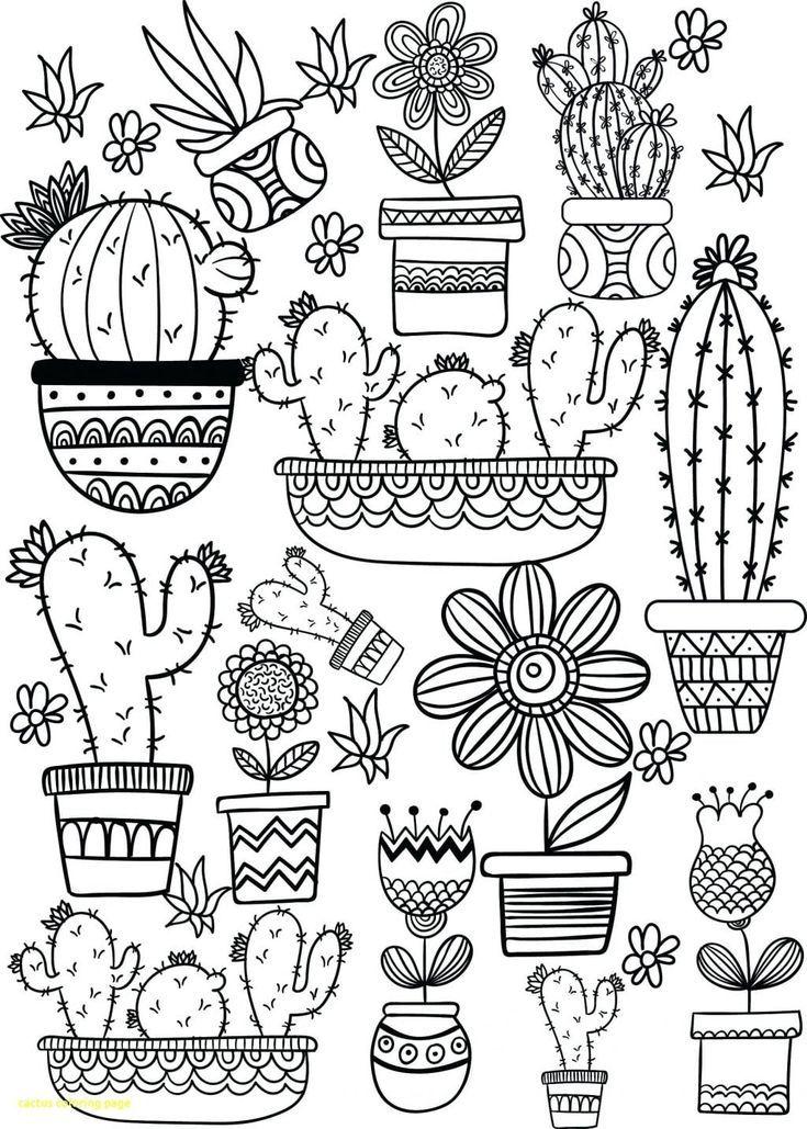 pin on cactus drawing