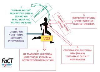 vo2 definition exercise - Google Search