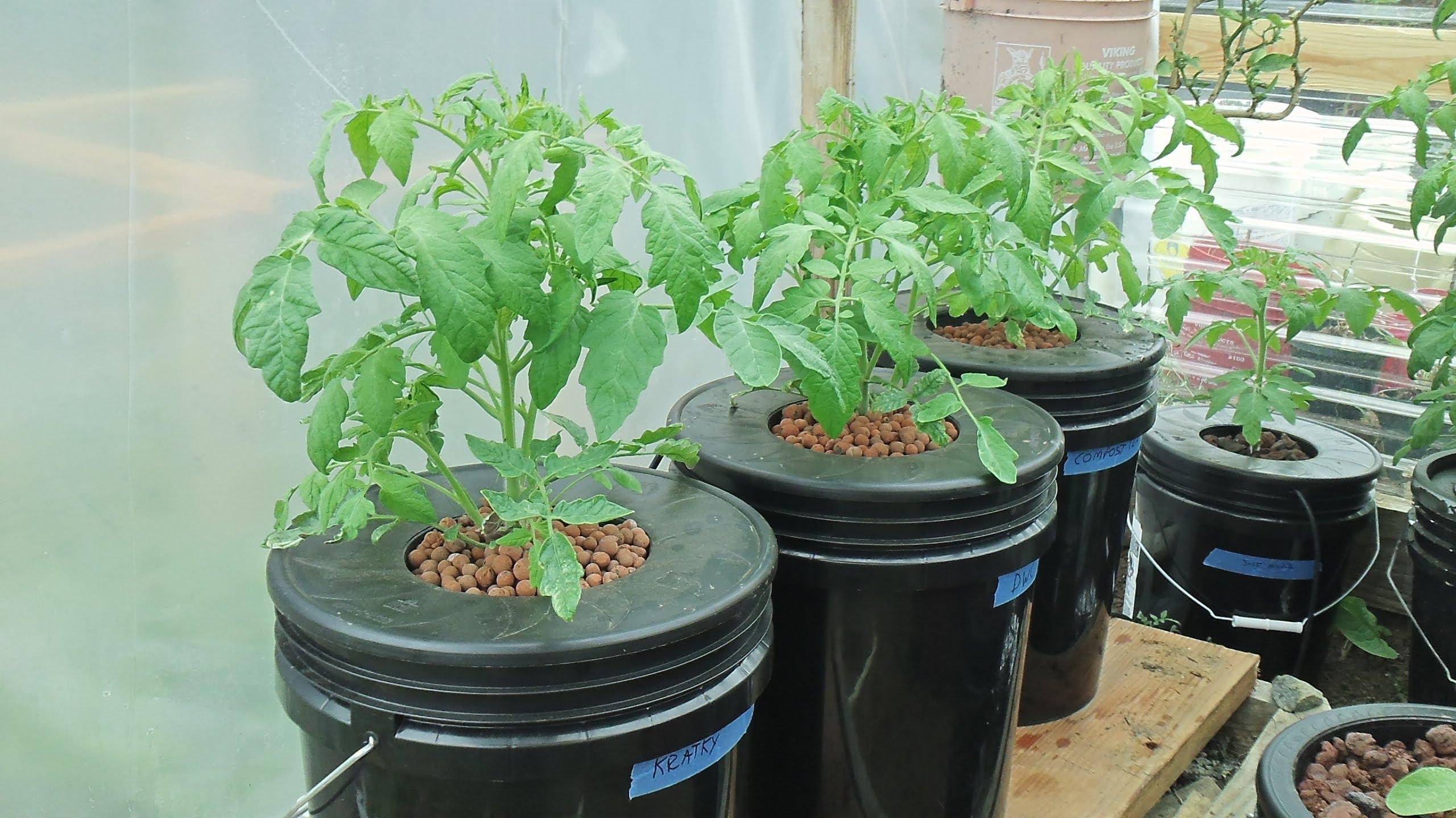 Kratky Method-DWC-Compost Tea Hydroponics #2 Hydroponic Tomatoes