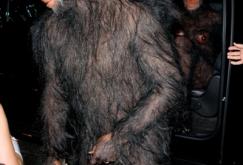 Heidi Klum Monkey Halloween Costume.Pin On Hairy Man