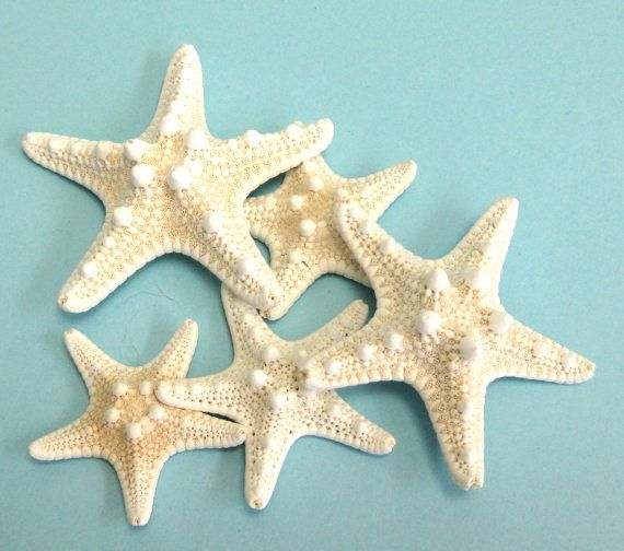 Starfish 10 Knobby Starfish 3 4 Bulk Shells Bulk Starfish Beach Weddings Beach Decor Beach Decor Sea Glass Crafts Starfish