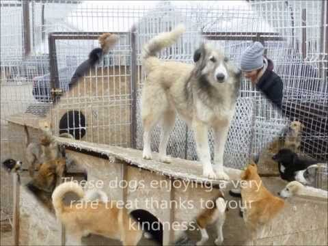 Paws2rescue Uk Dog Rescue Charity Video Made Following Our Trip To Romania People Keep A Bowl Of Rocks On Their Balcony To Throw At Dogs With Images Dogs Pet Organization