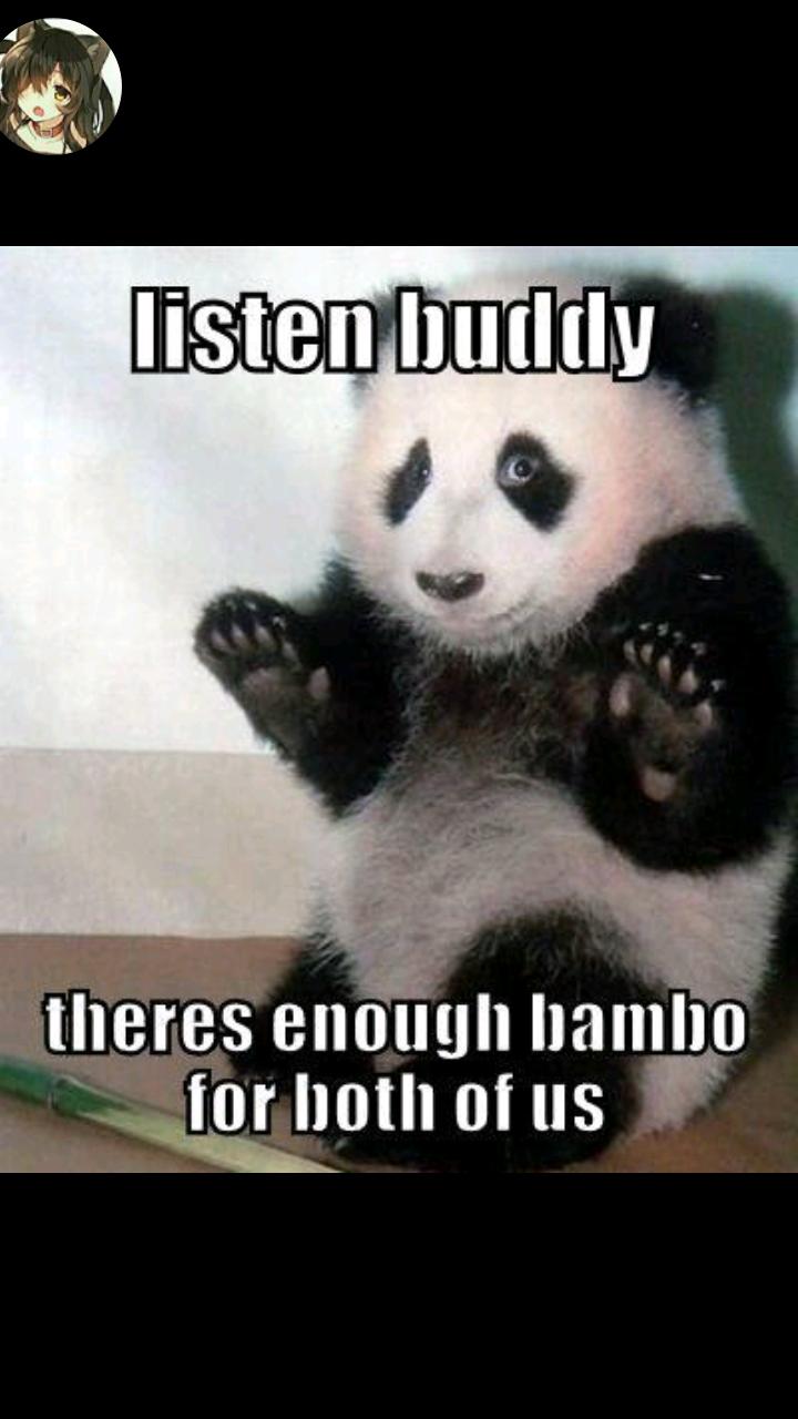 Pin by crystal soulripper on pandas pinterest panda panda voltagebd Choice Image