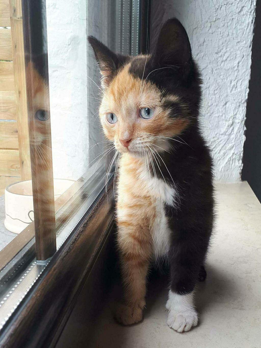 A Kitty Chimera Cute Animals Cats Kittens Cutest