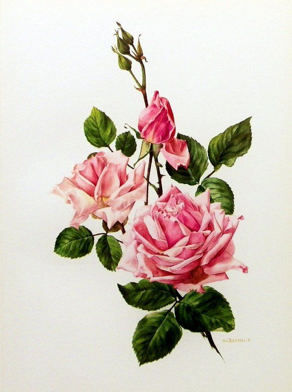 Instant Download The Pink Rose Bloom You Print Digital Image Delicate Victorian Romantic Pink Green