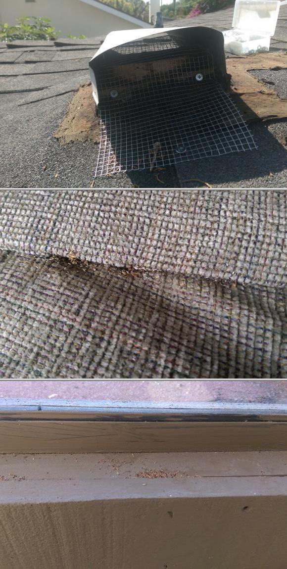 Pest Control Wood Repair Services Wood Repair Pest Control Pests