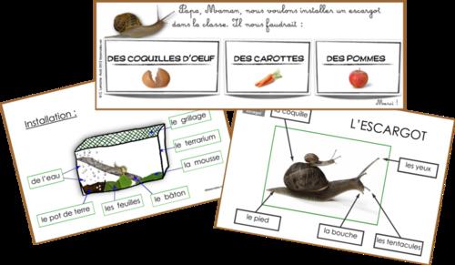 escargot escargots escargot elevage escargot et cnv. Black Bedroom Furniture Sets. Home Design Ideas