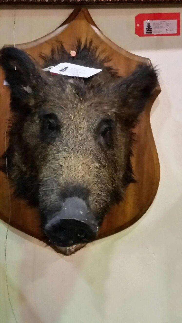 Crazy pigs