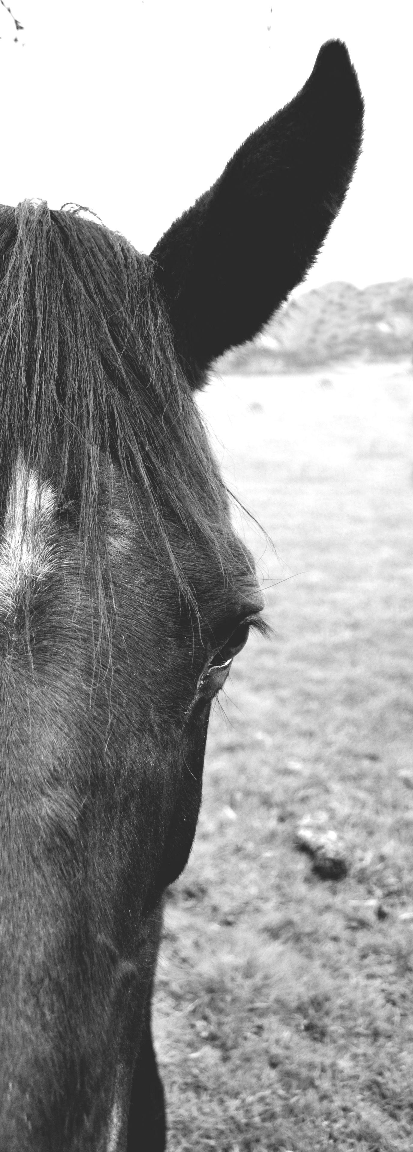 #horse #blackandwhite #black #beautiful #photography