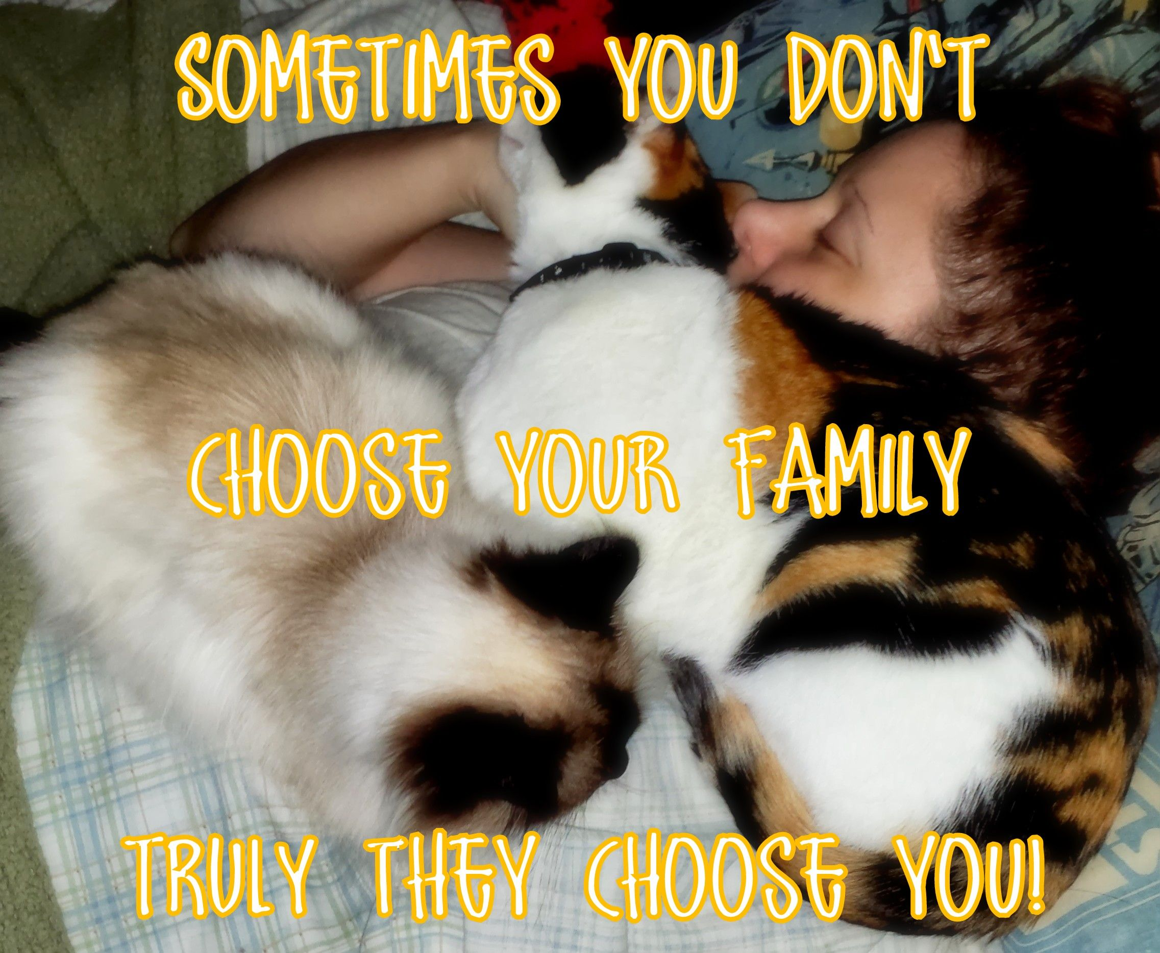 """""""Sometimes you don't choose your family truly they choose you!"""" Photo of me & my Cindle (RIP) & Bonney laying on top of me in bed. -- cats, cat, feline, kitties, kitty, laying, snuggle, cuddle, embrace, love, loving, bond, pet parent, cat lover, family, connected, bonded, saying, quote,  photo, meme."""