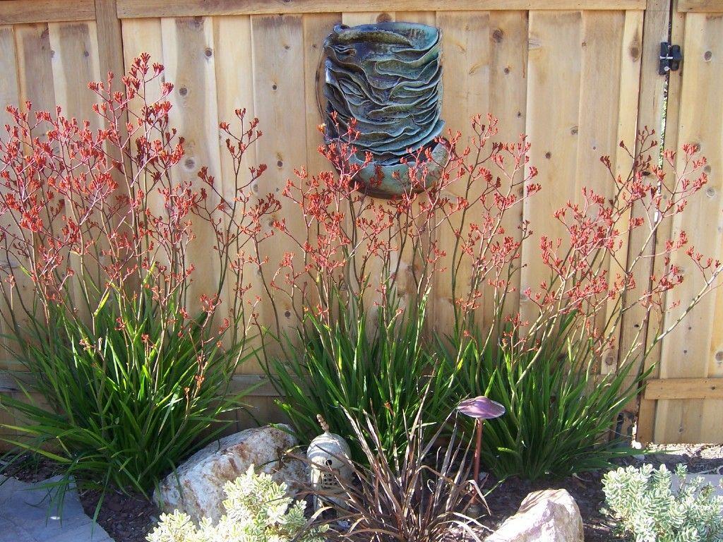 oriental   The 2 Minute Gardener: Photo - Oriental Garden   oriental ...