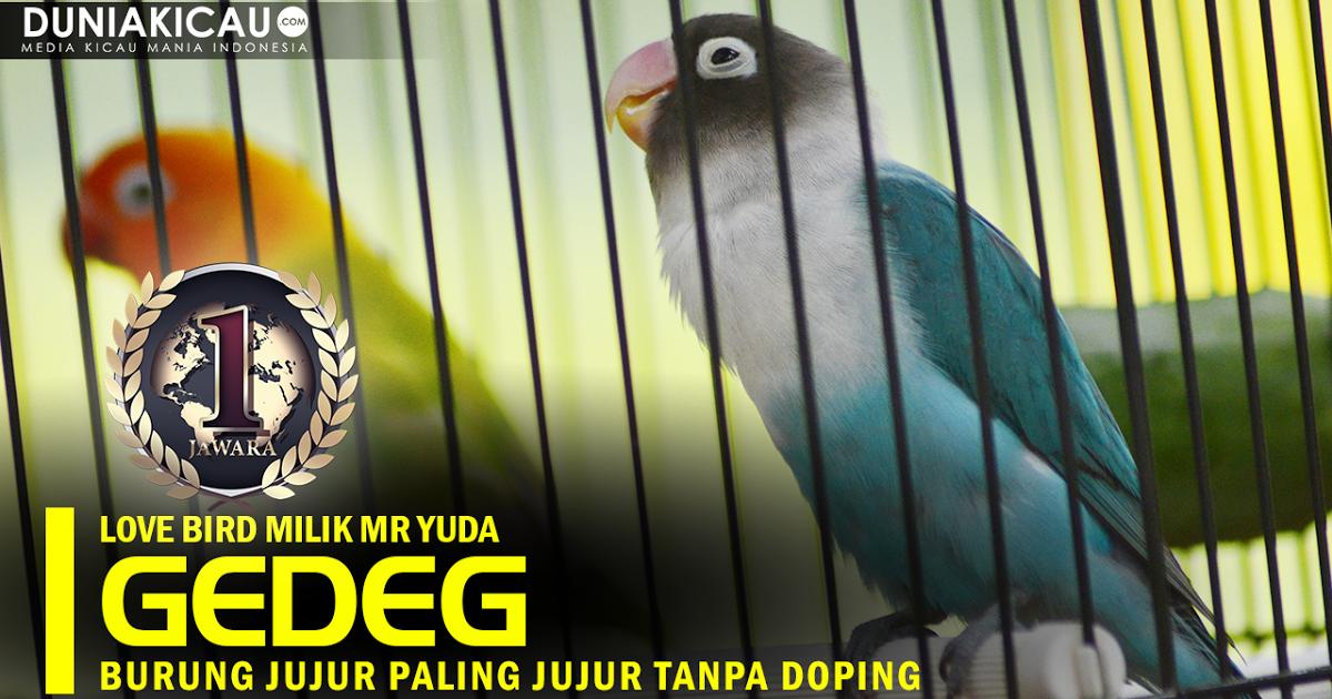 Download Gambar Burung Kicau Mania Dengan Kemajuan Zaman Yang