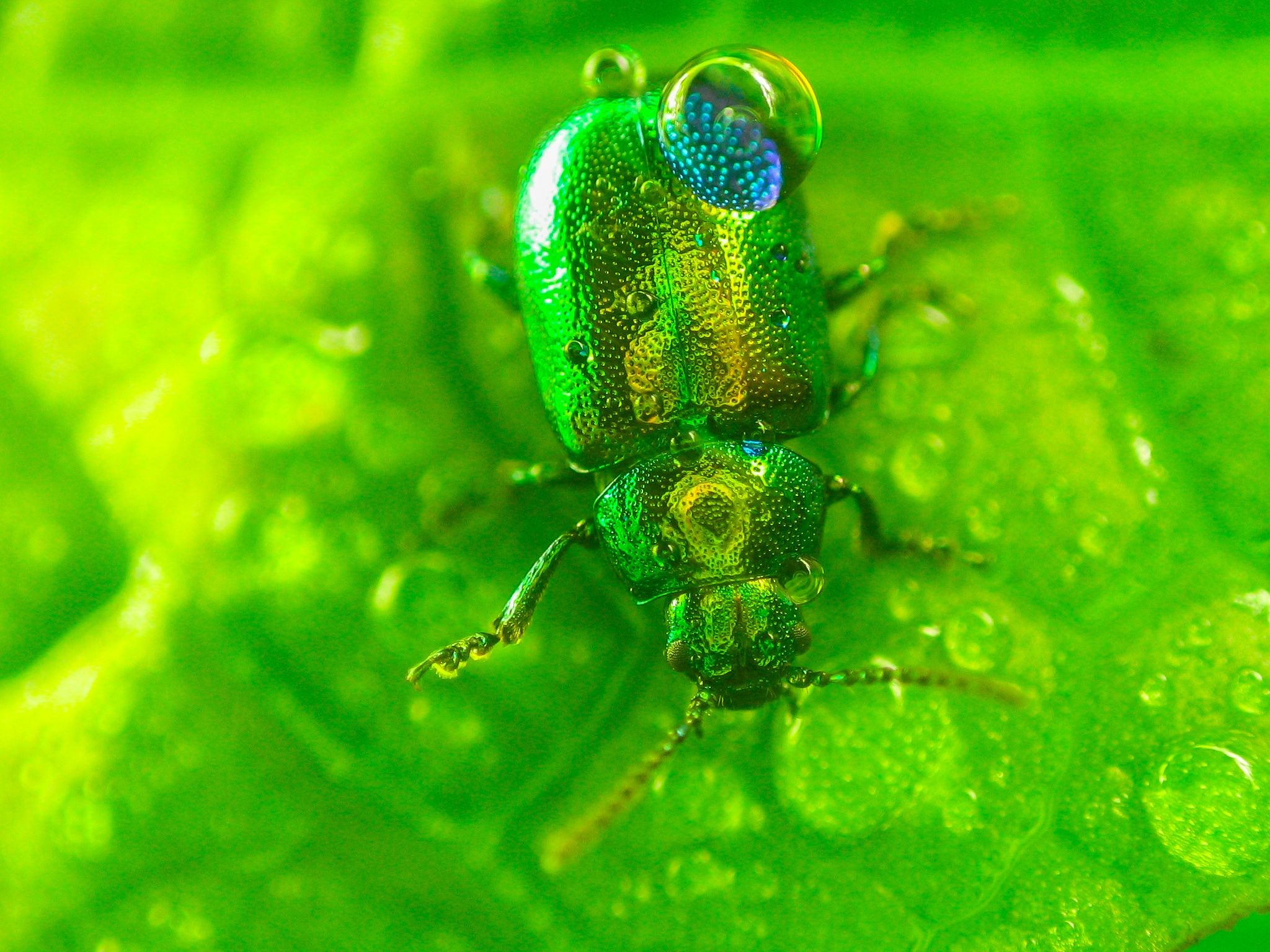 Little green bug with rain drops on it by mihai ologeanu on 500px little green bug with rain drops on it by mihai ologeanu on 500px buycottarizona