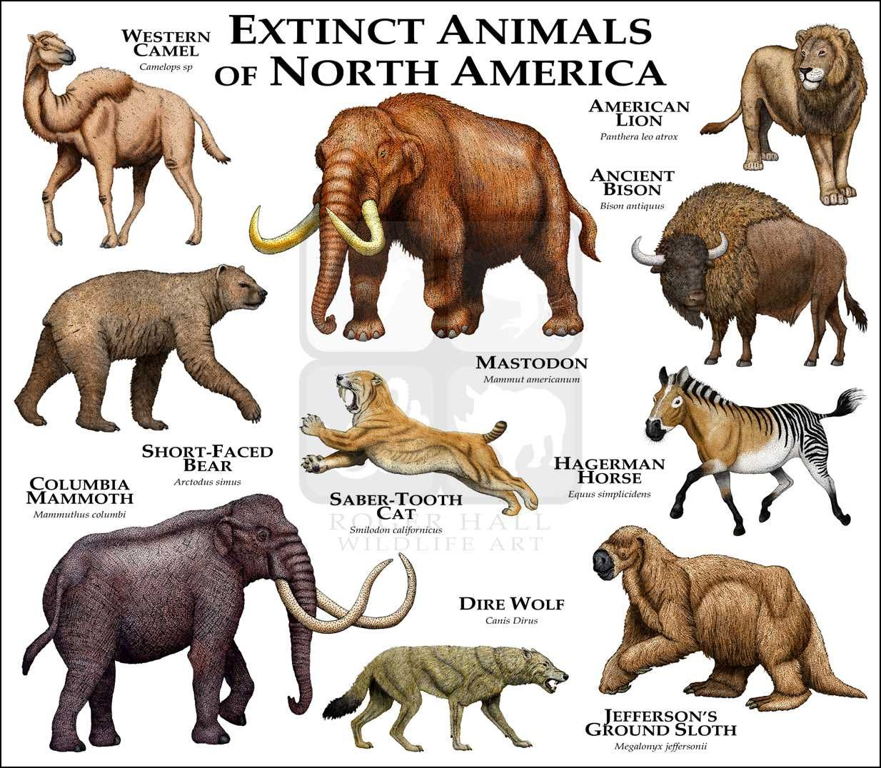 Extinct Mammals of North America Fine Art Print Extinct