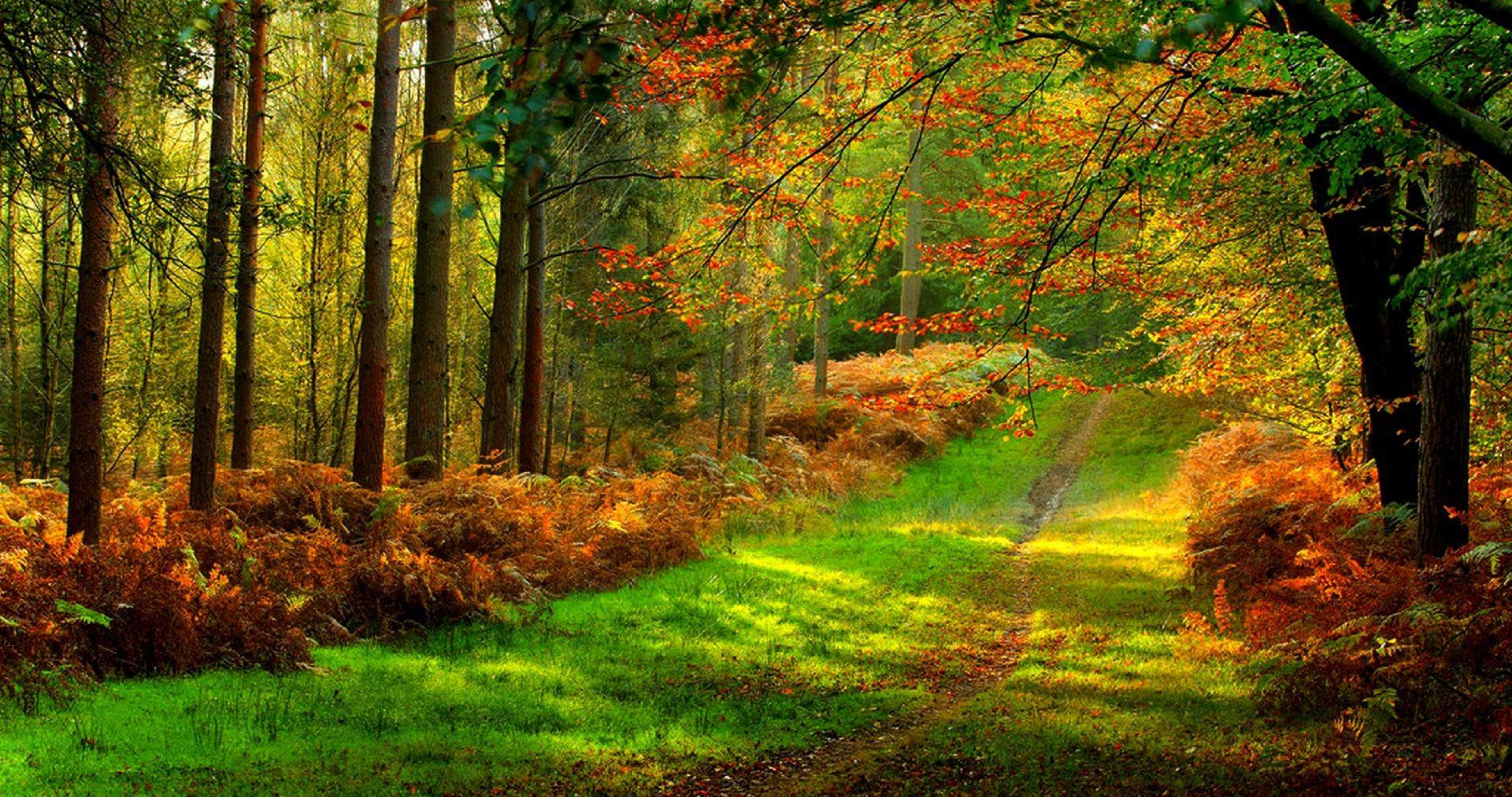 Forest Road Colorful 4k Ultra Hd Wallpaper Forest Road Landscape Wallpaper Nature