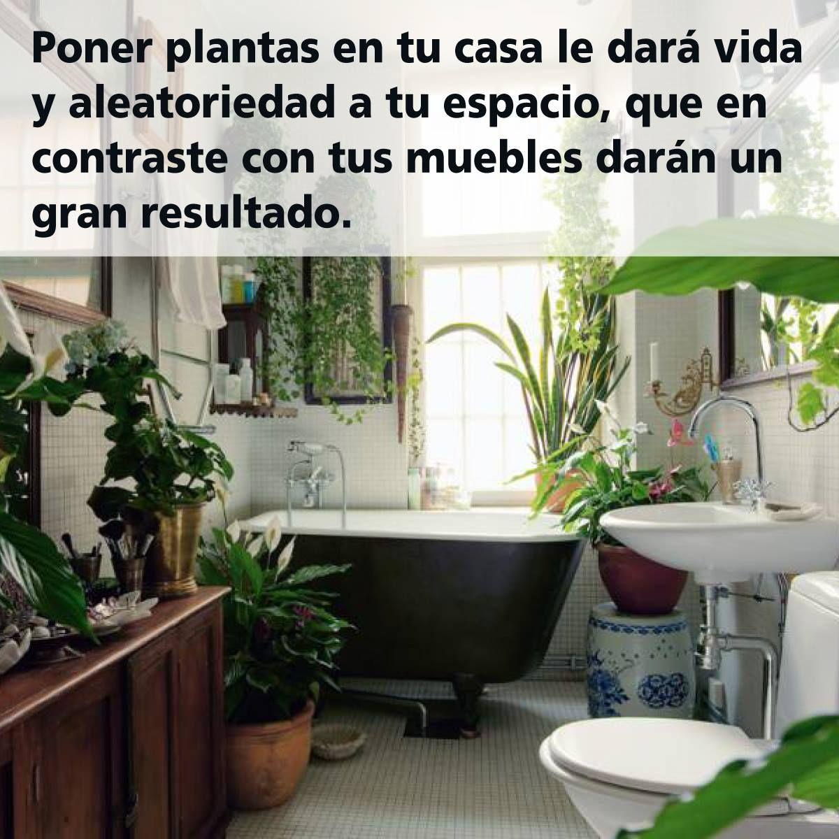 Para Los Amantes De Las Plantas Y Su Buena Compañía No Duden En Ponerlas! U2014