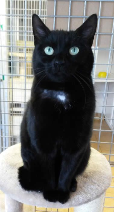 Cats For Adoption Rspca Manchester Salford