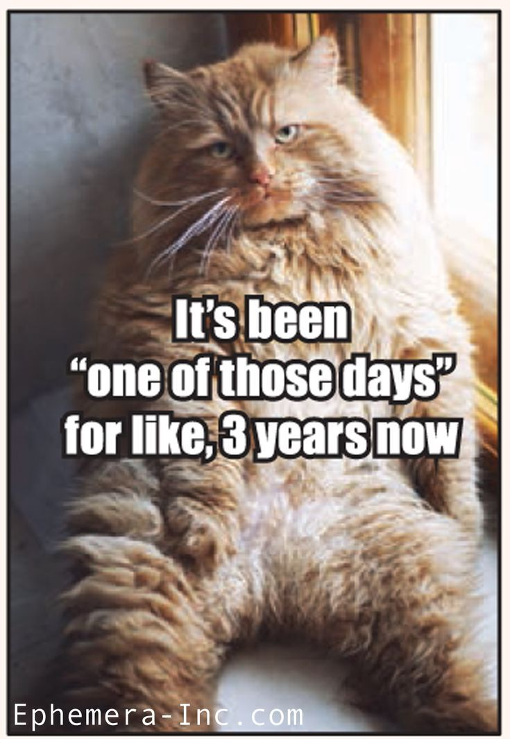 It S Been One Of Those Days For Like 3 Years Now Funny Animal Pictures Funny Animal Memes Funny Cats