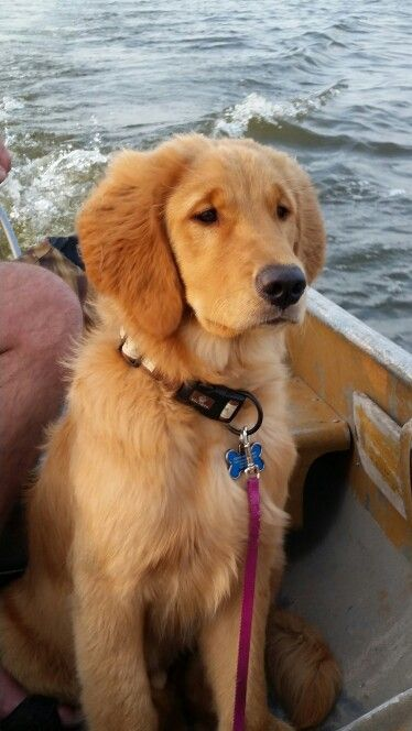 Wrangler takes his first boat ride