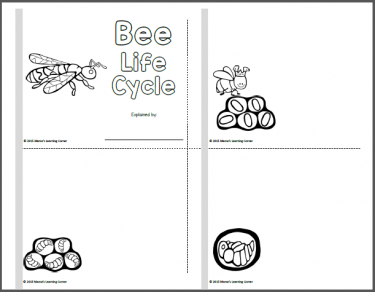 Bee Life Cycle Worksheets | Insects and bugs | Bee life cycle, Life ...