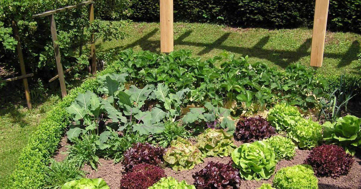 anbauplanung im gemüsegarten | winter!, ist and miete, Garten und erstellen