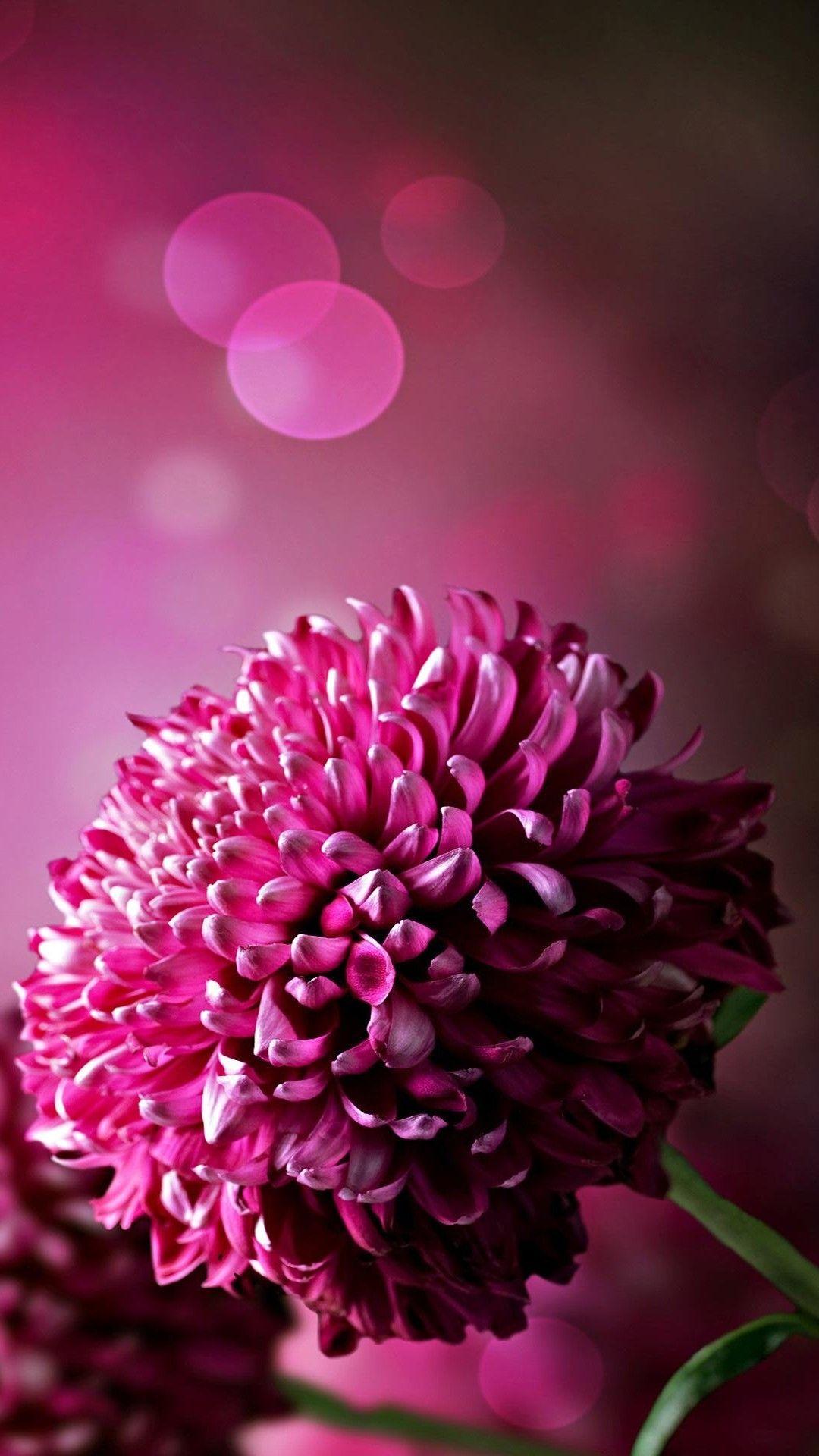 Purple Flowers Wallpaper For Phone | Purple flowers ...