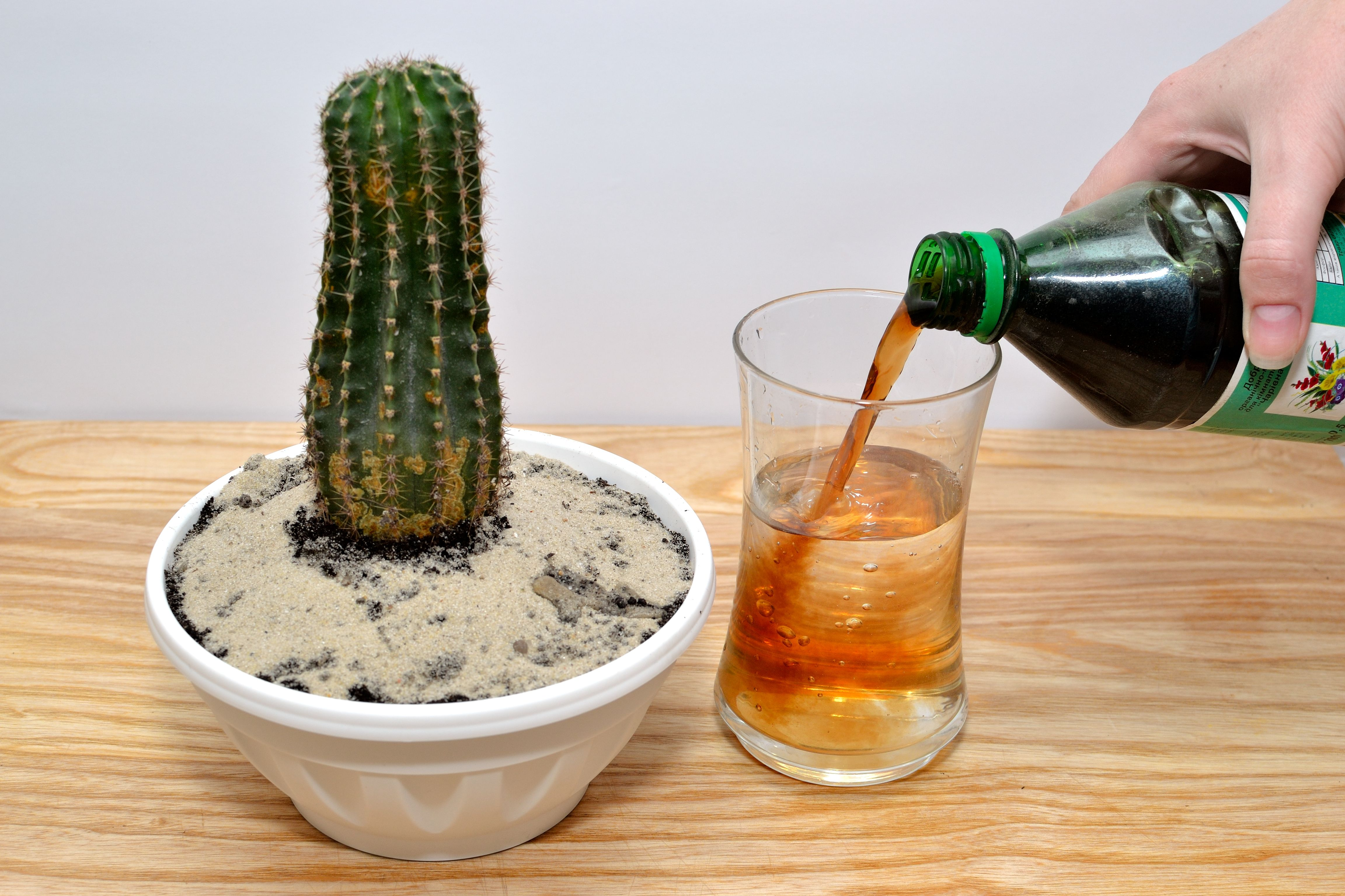Photo of How to Grow Cactus Indoors