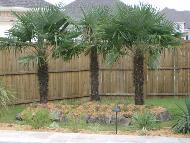 North Texas Palms Pottery Specializing In Cold Hardy Palm Trees For The Dallas