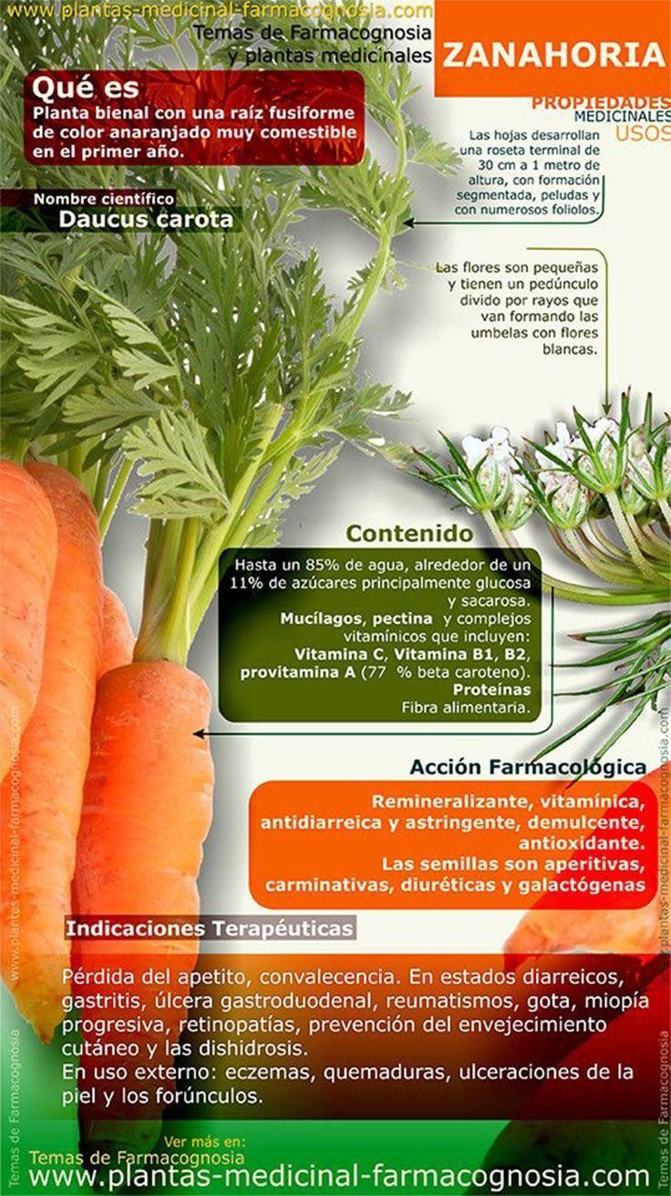 Propiedades y usos medicinales de la zanahoria for Planta decorativa propiedades medicinales