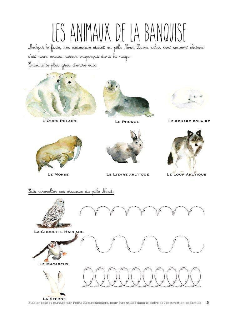 Aper u du fichier le p le table sensorielle polaire pinterest - Animaux pole nord ...