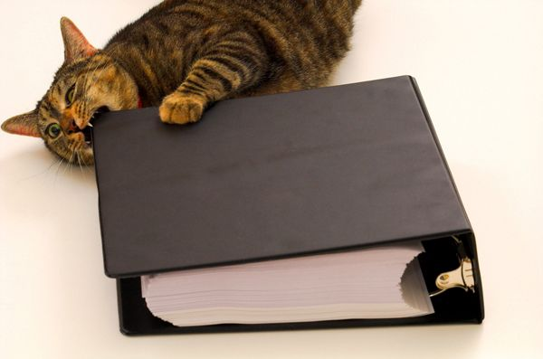 your binder! | Cats Chewing on... | Pinterest | Binder and Cat