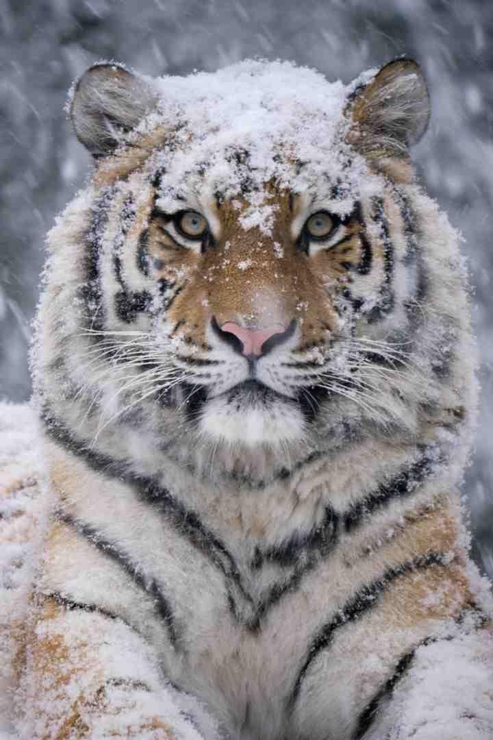 Dieren In De Sneeuw Google Zoeken Beauty Of Winter